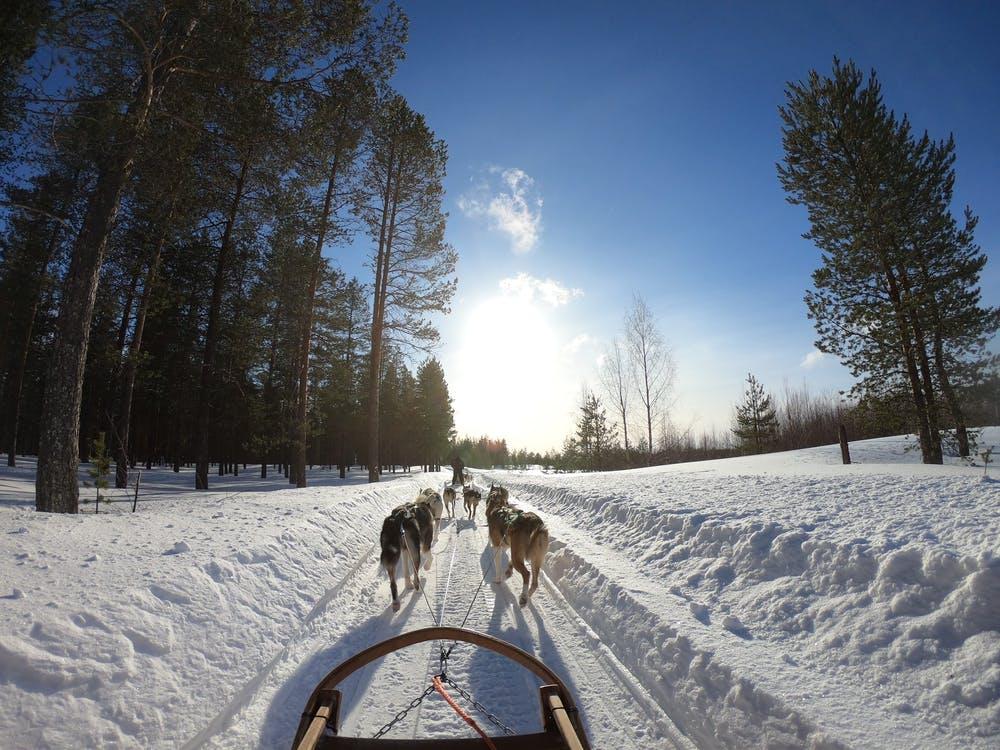 Vista da una slitta trainata da cavalli su un sentiero coperto di neve e circondato da alberi