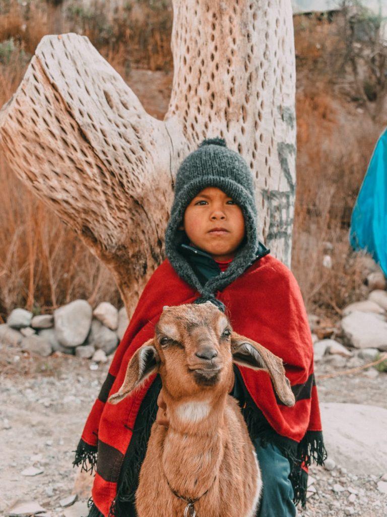 Foto di un bambino su una capra