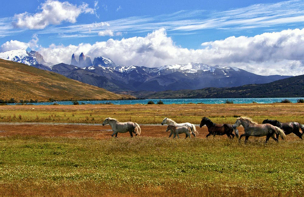 Vista di una distesa di verde con dei cavalli con dietro un lago e delle montagne