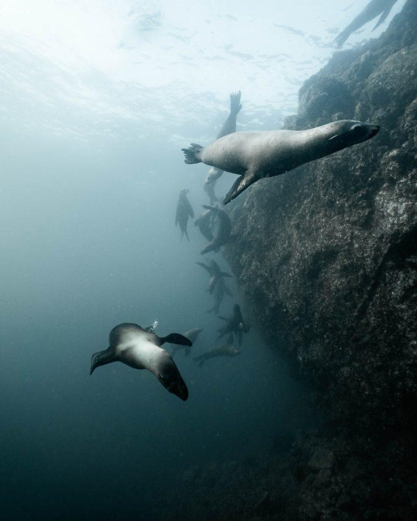 Vista sott'acqua di foche
