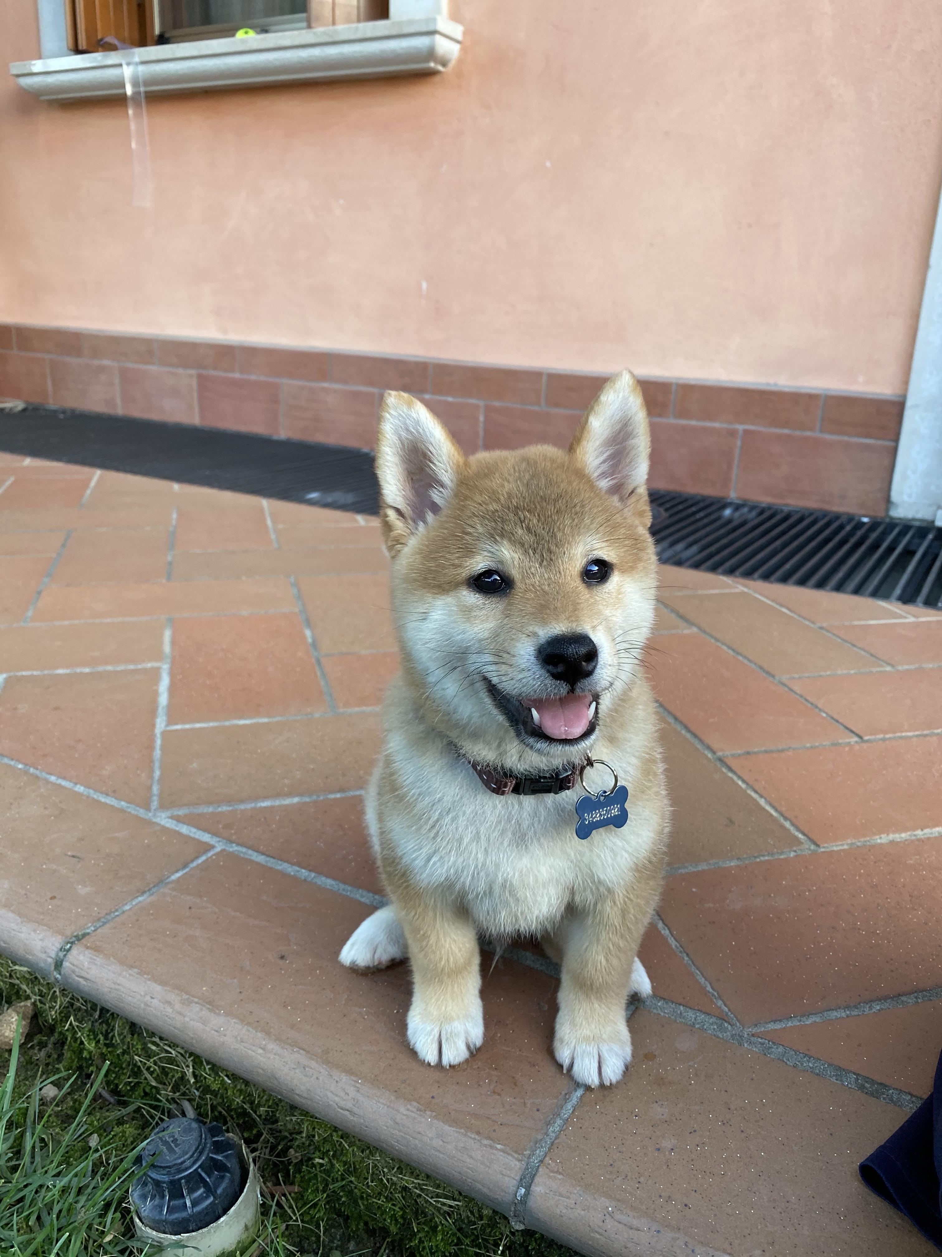 Foto di un cagnolino