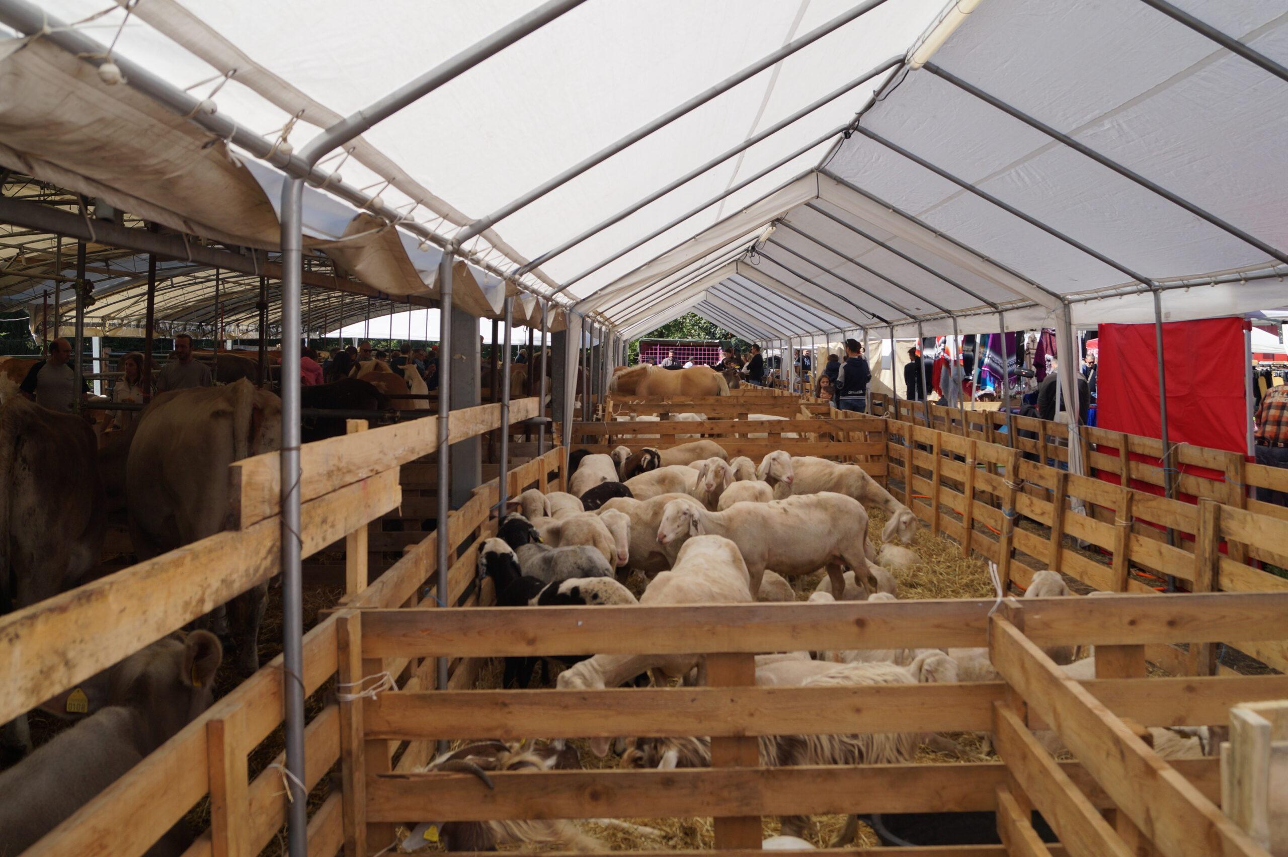 Foto di un recinto di pecore
