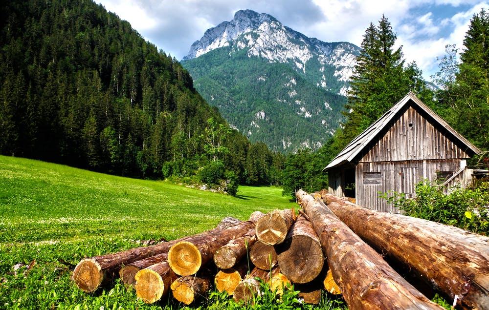 Vista da un rifugio di montagne verdi e circondato da alberi alti e verdi