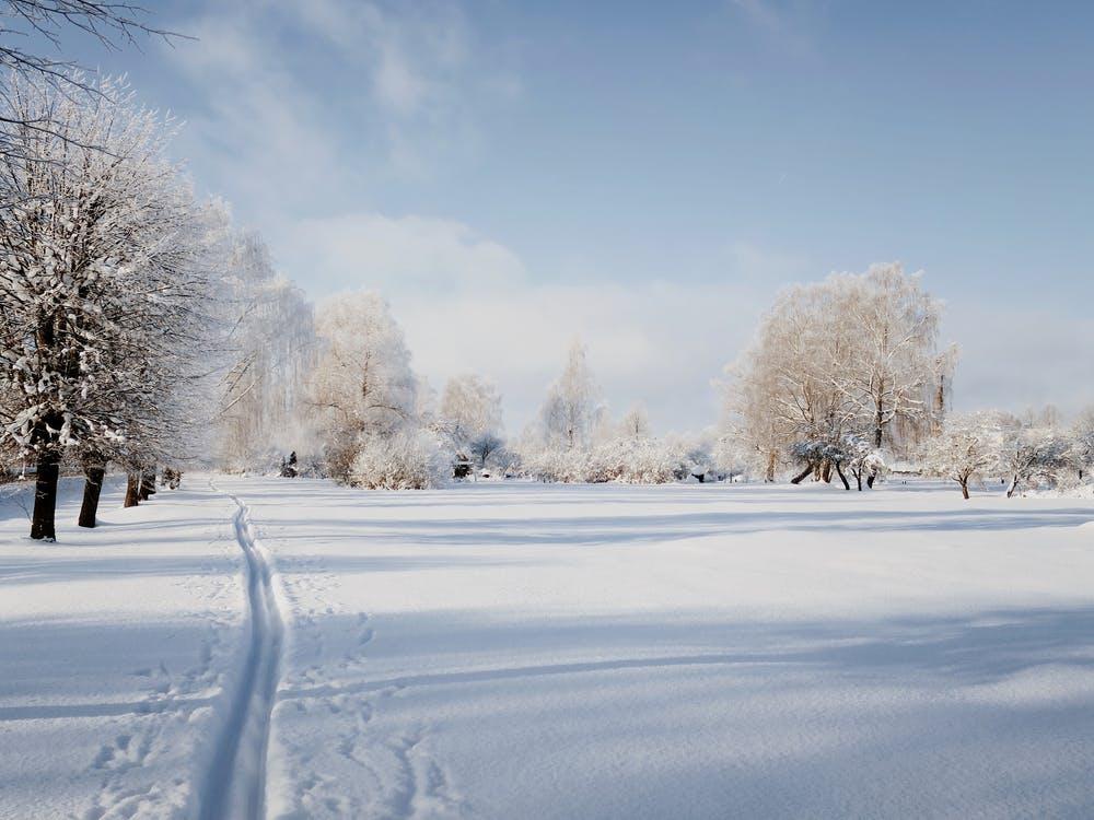 Vista di alberi spogli e coperti di neve su un terreno totalmente innevato